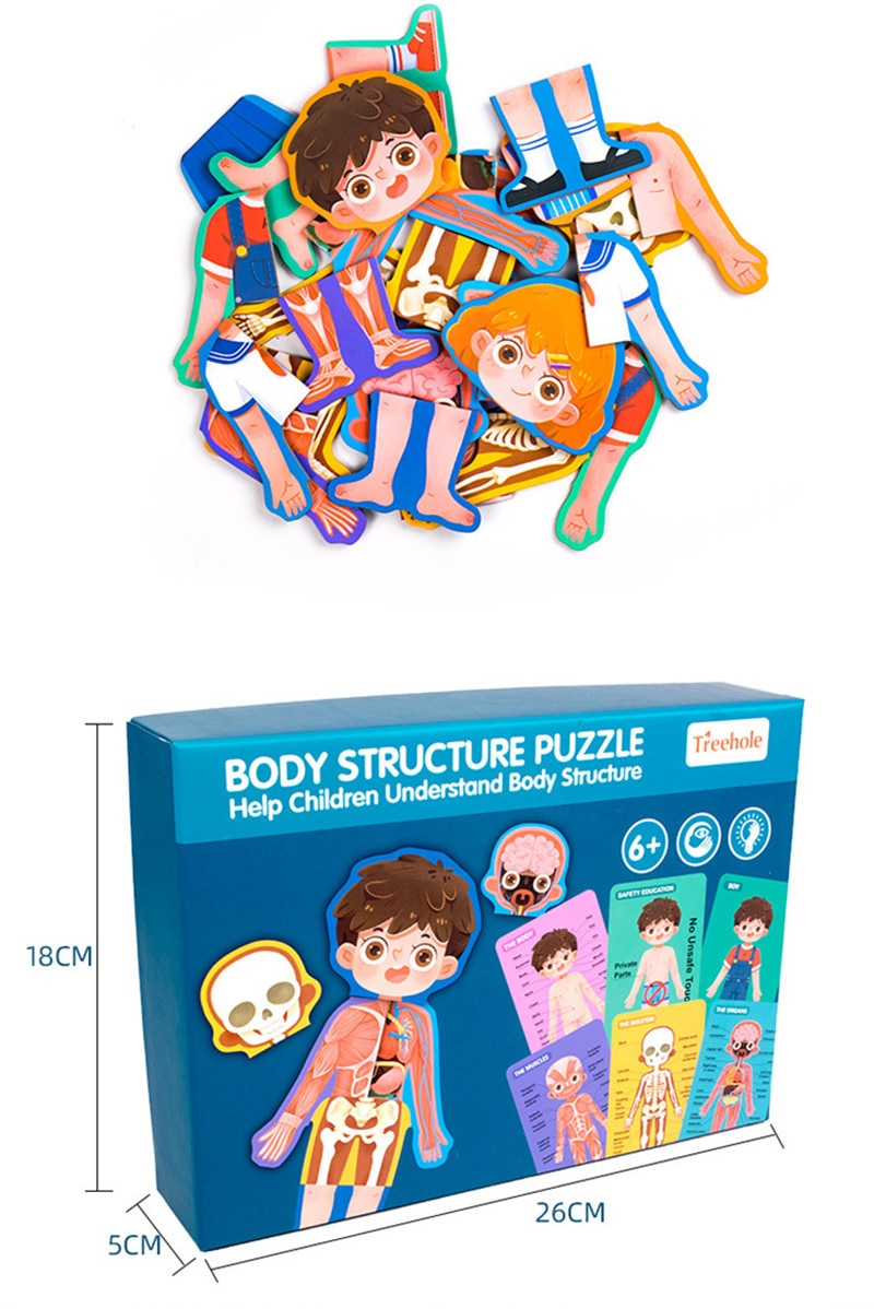 Children Biological toys Human Body Structure Cognitive Puzzle Wooden Puzzle Toys Boys and Girls Safety Education Toys