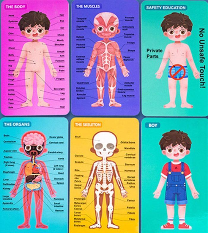 Anatomy Toy Educational Puzzle