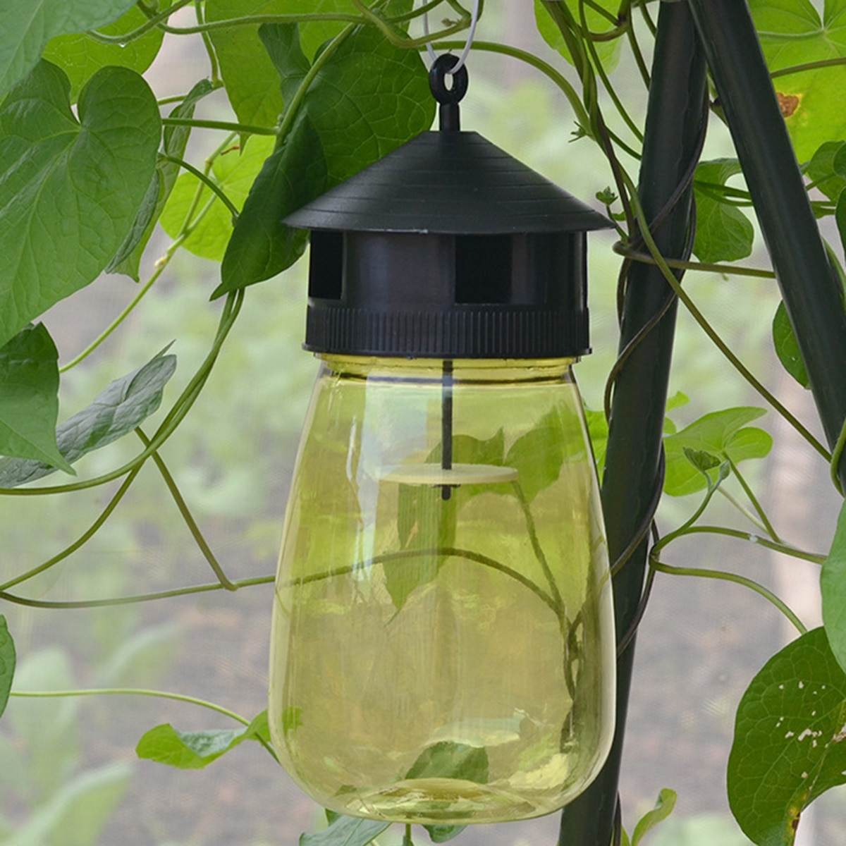 Wasp Trap Fruit Fly Flies Insect Fly Catcher Reusable Hanging Honey-Trap Catcher No-Poison Trap Bottle Fly Killer Fly Trap
