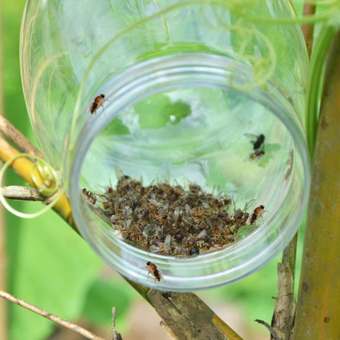 Hanging Fly Trap Pest Killer