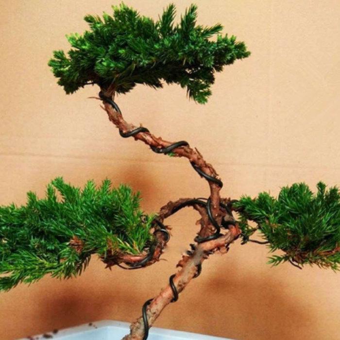 Bonsai Training Wires Garden Tool (6pcs)