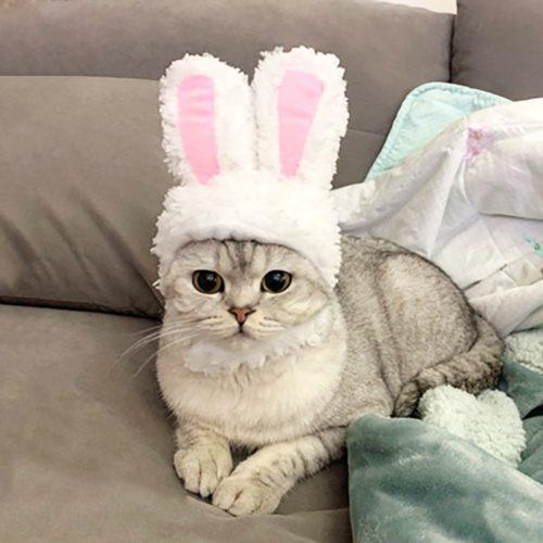 Cat Bunny Ears Pet Headwear