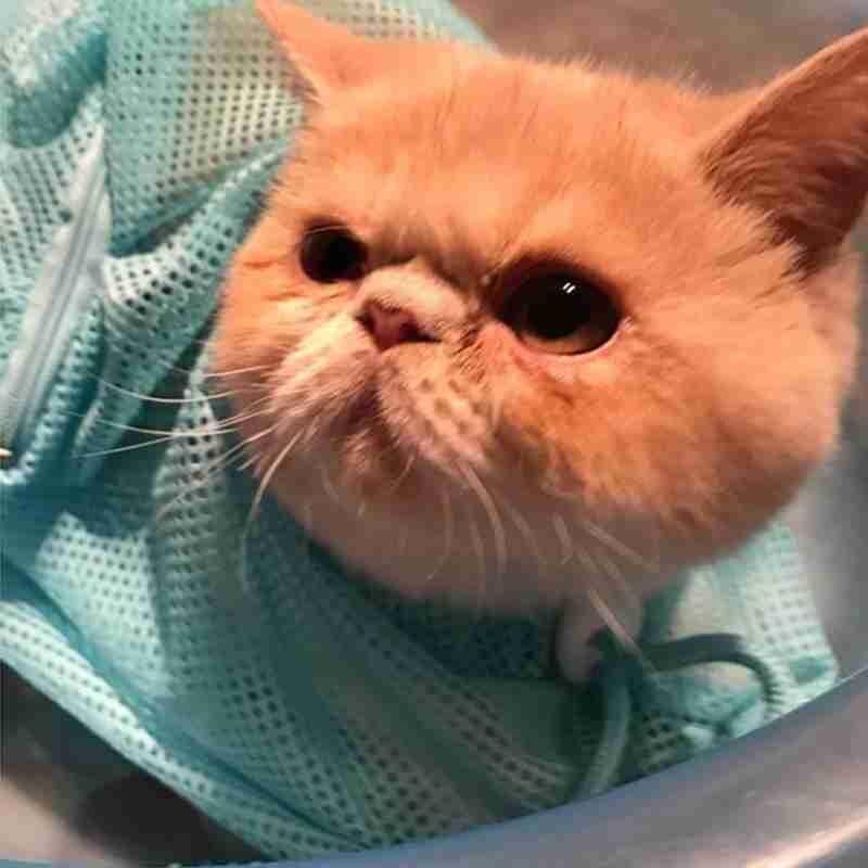 Mesh Cat Bathing Bag Cats Grooming Washing Bags Cat Bag Scratching No Cutting Clean Supplies Restraint Bite Nail Bath Cat C1W4