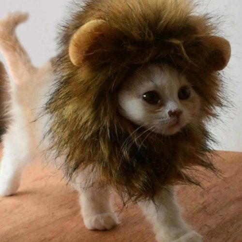 Cat Lion Maine Funny Pet Costume