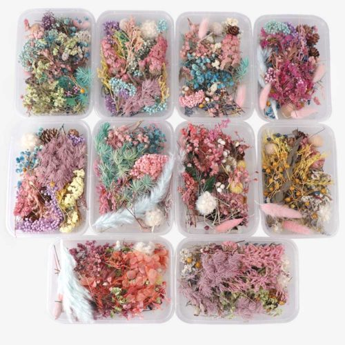 Real Natural Pressed Dried Flowers