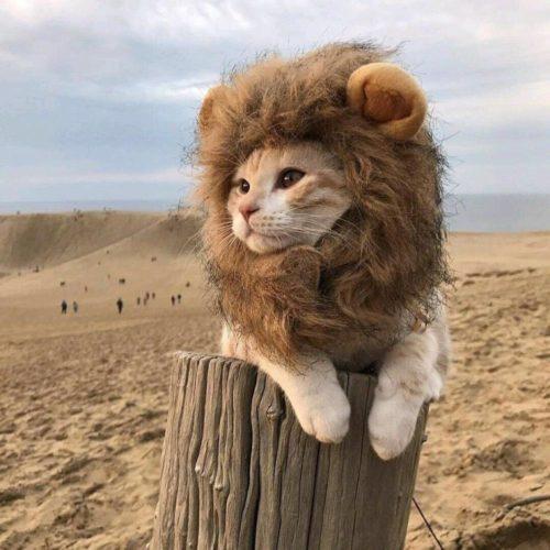 Pet Head Cap Lion Costume For Cats