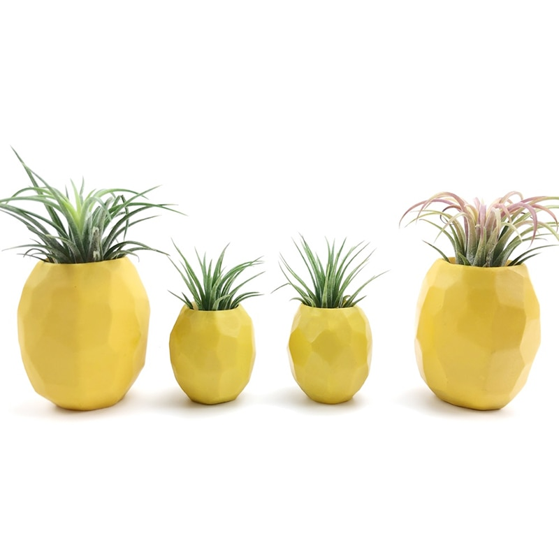 3M Glue Pineapple Air Plant Pot Air Plant Holder Air Plant Pineapple Planter Container Pot Display with Indoor Wall Home Decor