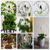 Decorative Bird Mini Trellis for Potted Plants