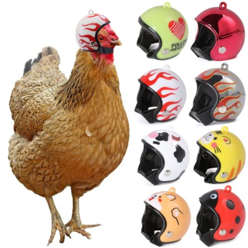 Helmet for Chicken Pet Protective Accessory
