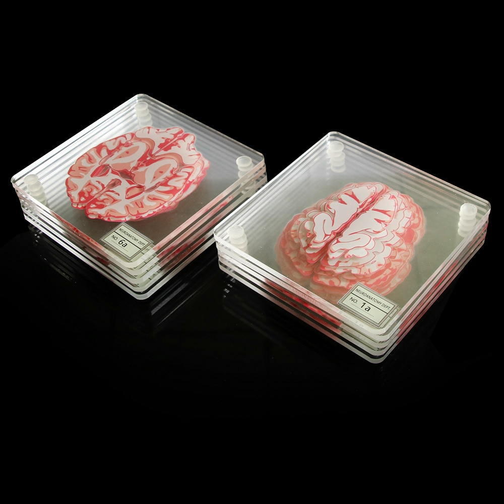 Brain Specimen Coasters Set 3D Organ Brain Artwork Brain Slices Square Acrylic Glass Drinks Table Coaster Drunk Scientists Gift