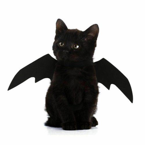 Cat Bat Costume Pet Halloween Wings