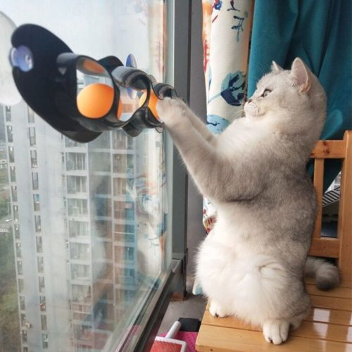 Window Suction Cat Track Toy