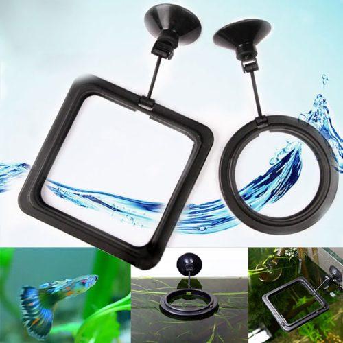 Floating Aquarium Feeding Ring with Suction