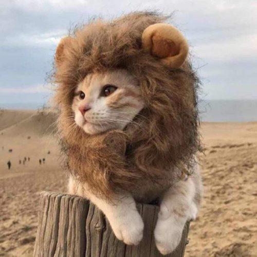 Mane for Cat Lion Wig Costume