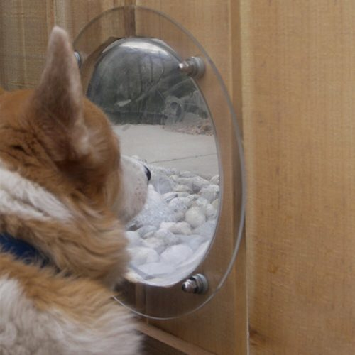 Dog Fence Bubble with Screws