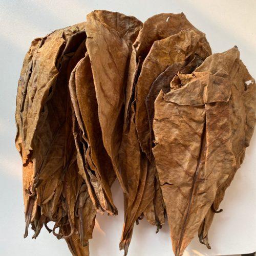 Natural Almond Leaves for Aquarium (500pcs)