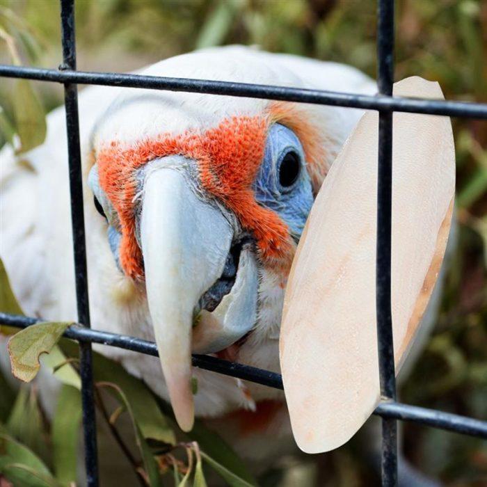 Bird Cuttlebones Chew Toys (10pcs)
