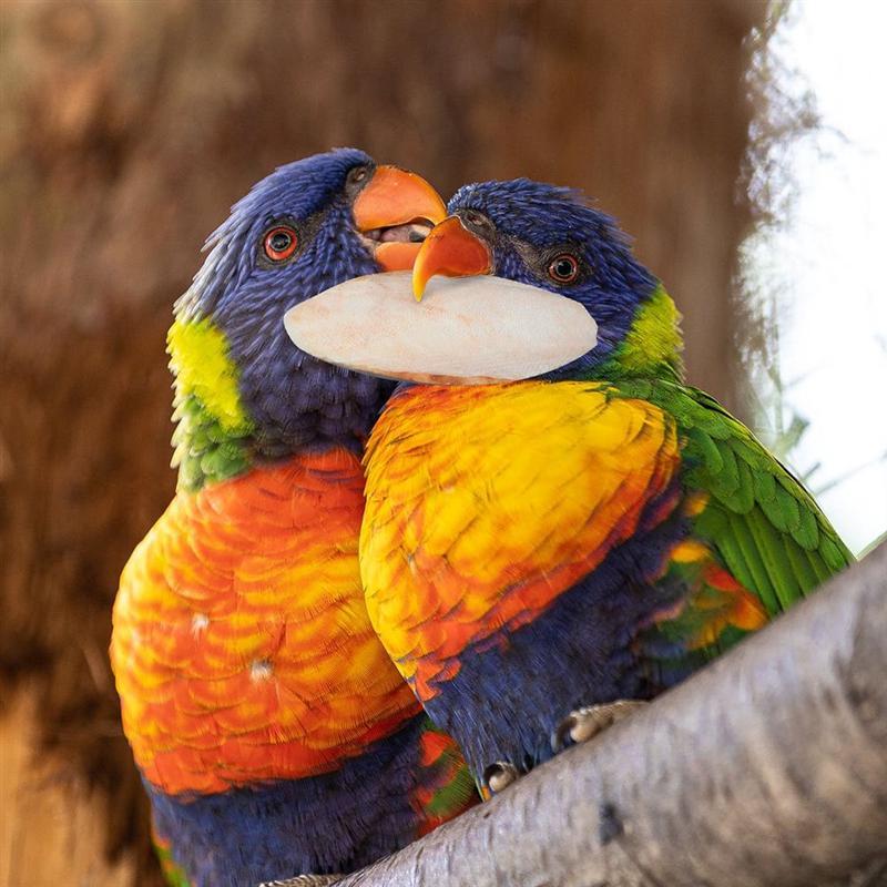 10Pcs Parrot Desalting Cuttlebone Toys Practical Pet Training Chew Molar Toys