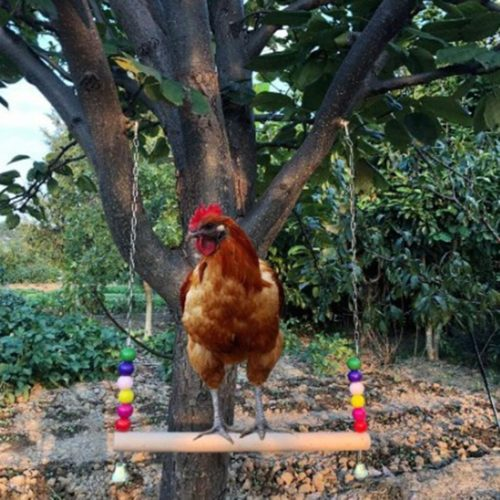 Balance Chicken Swing