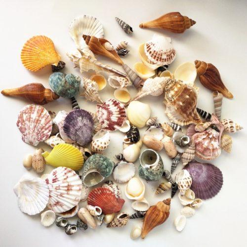 Mixed Real Seashells (120pcs)