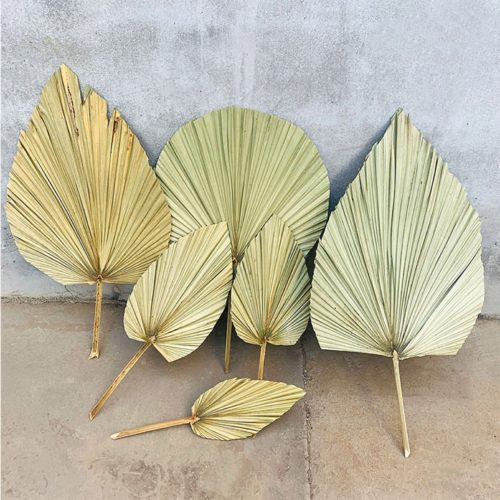Real Natural Dried Palm Leaf