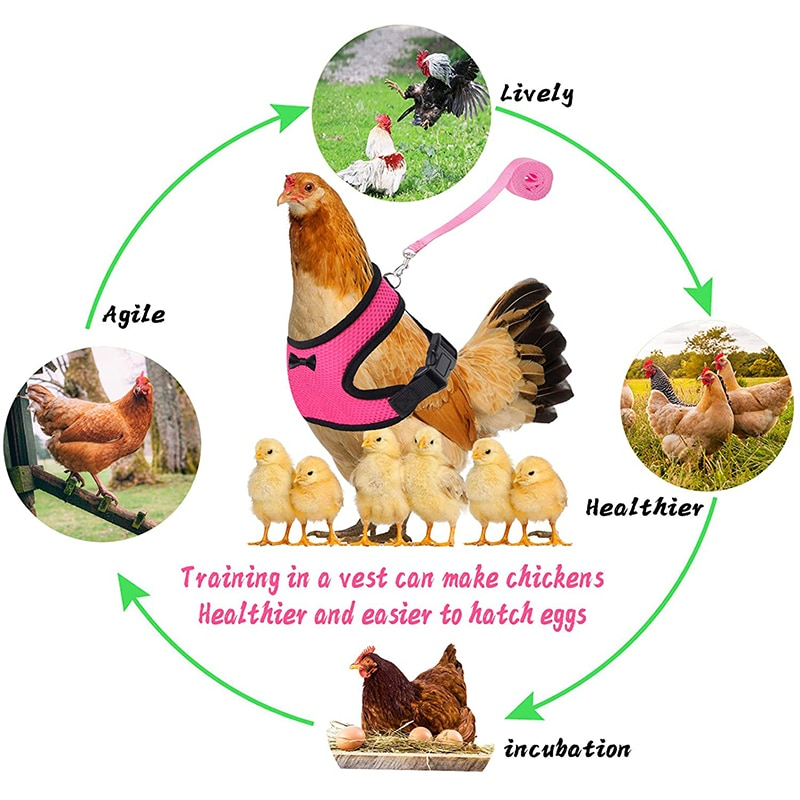 Adjustable Chicken Harness Leash Comfortable and Breathable Small Size Hen Pet Vest for Chicken Duck Goose Training Walking
