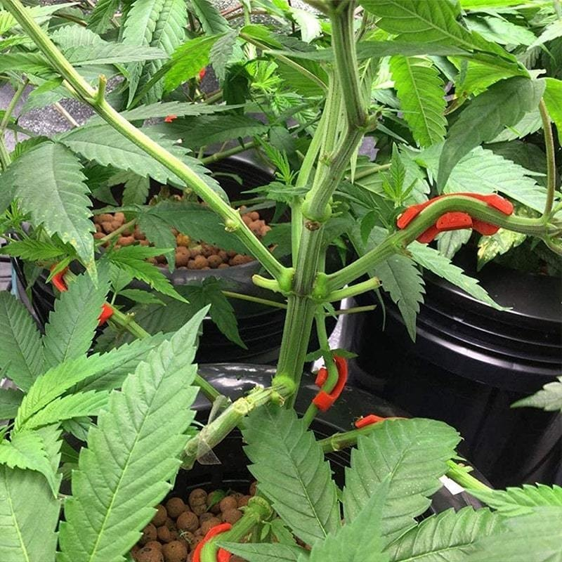 10/20/60PCS 90 Degree Plant Bender for Low Stress Training Plant Training Curved Plant Holder PETG