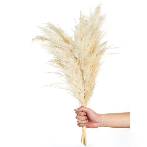 White Pampas Grass Decoration (10pcs)