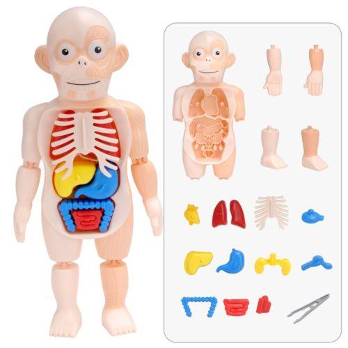 3D Anatomy Human Body Puzzle